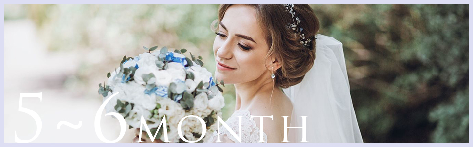 5~6ヶ月プラン